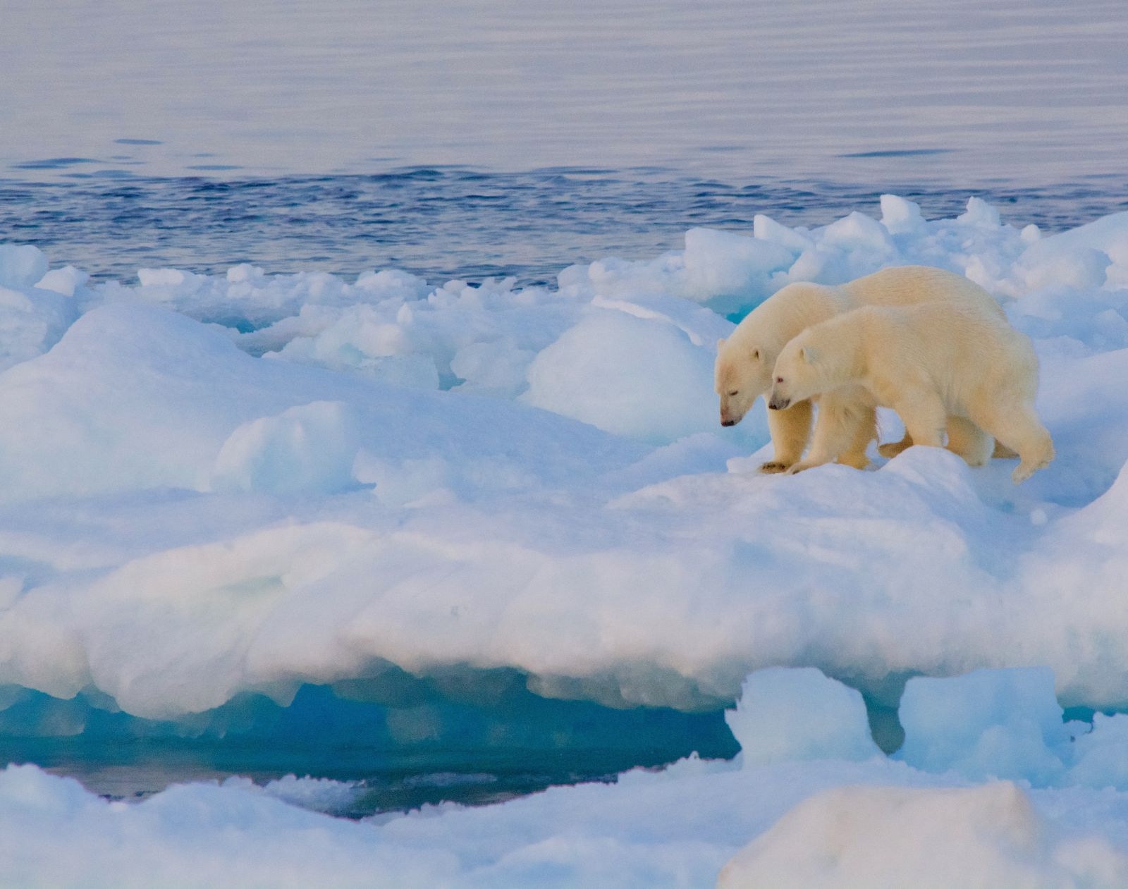 polar-bear-and-cub-ice-floe-adventure-canada