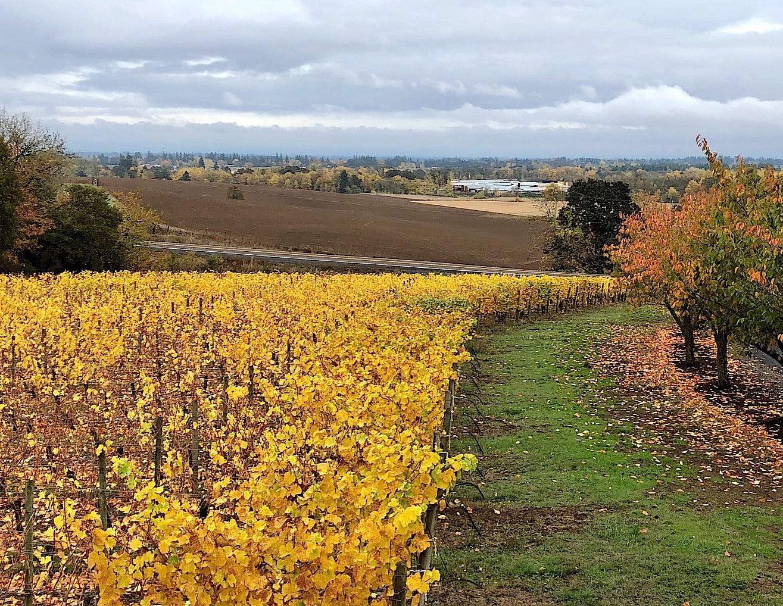 cristom-vineyards