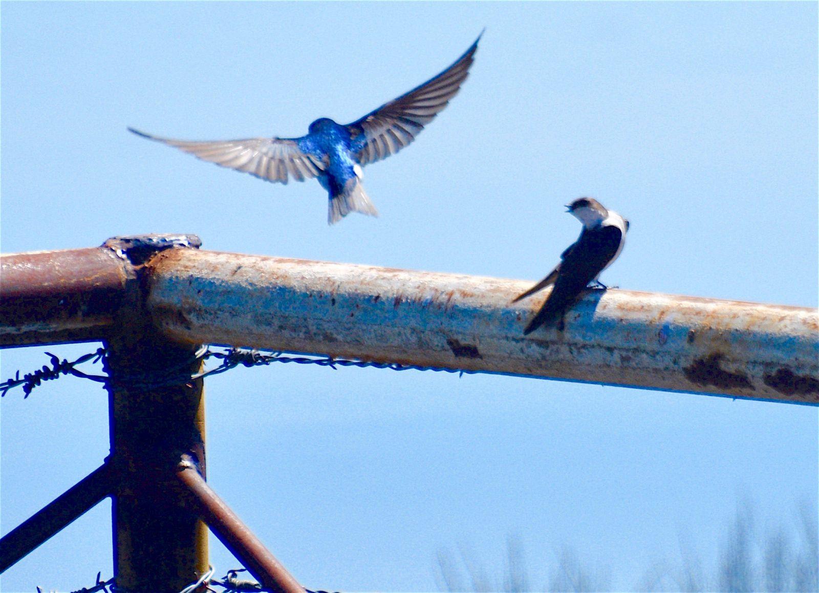 bird-in-flight-sierraville