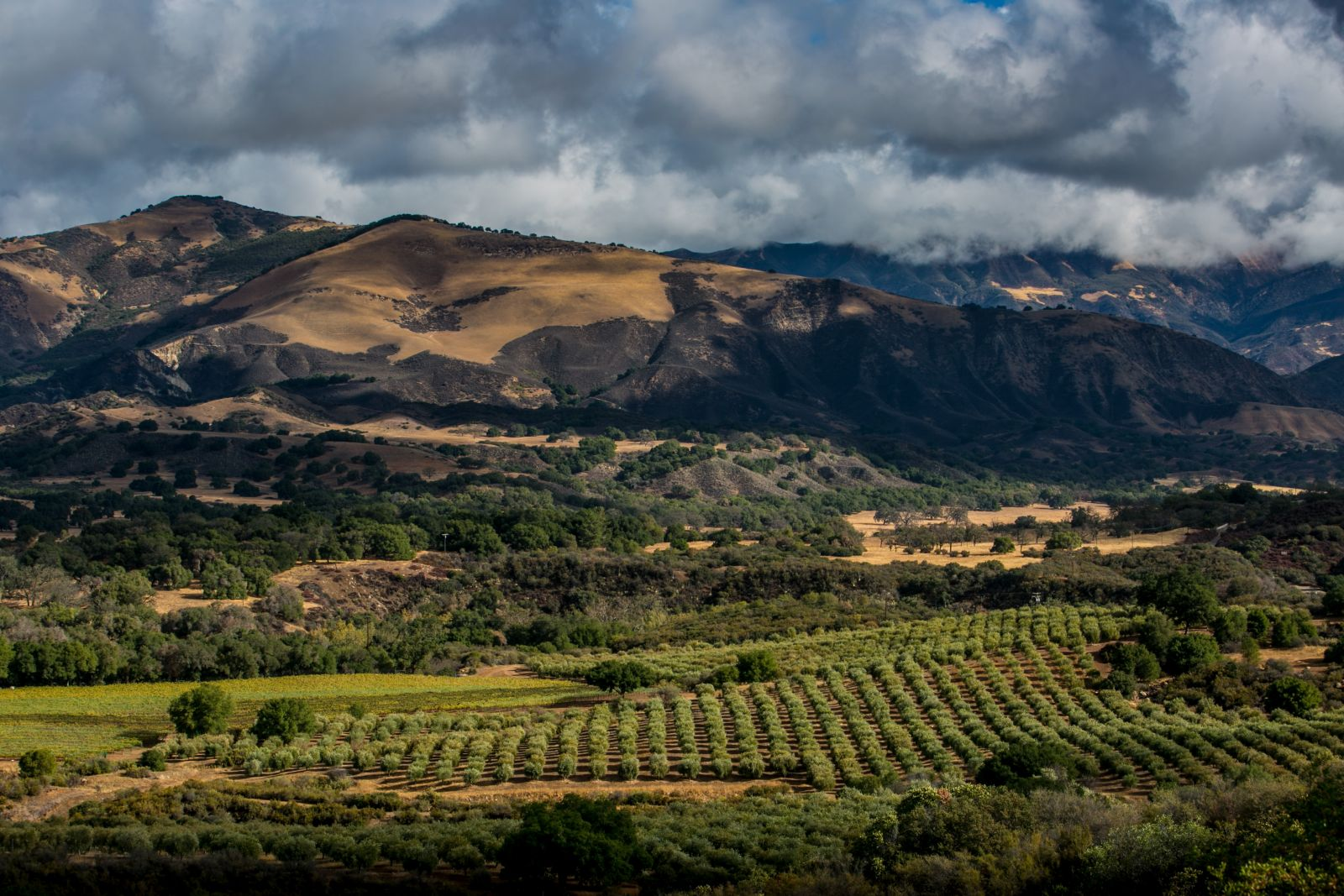 Exploring Santa Barbara County Wine Country