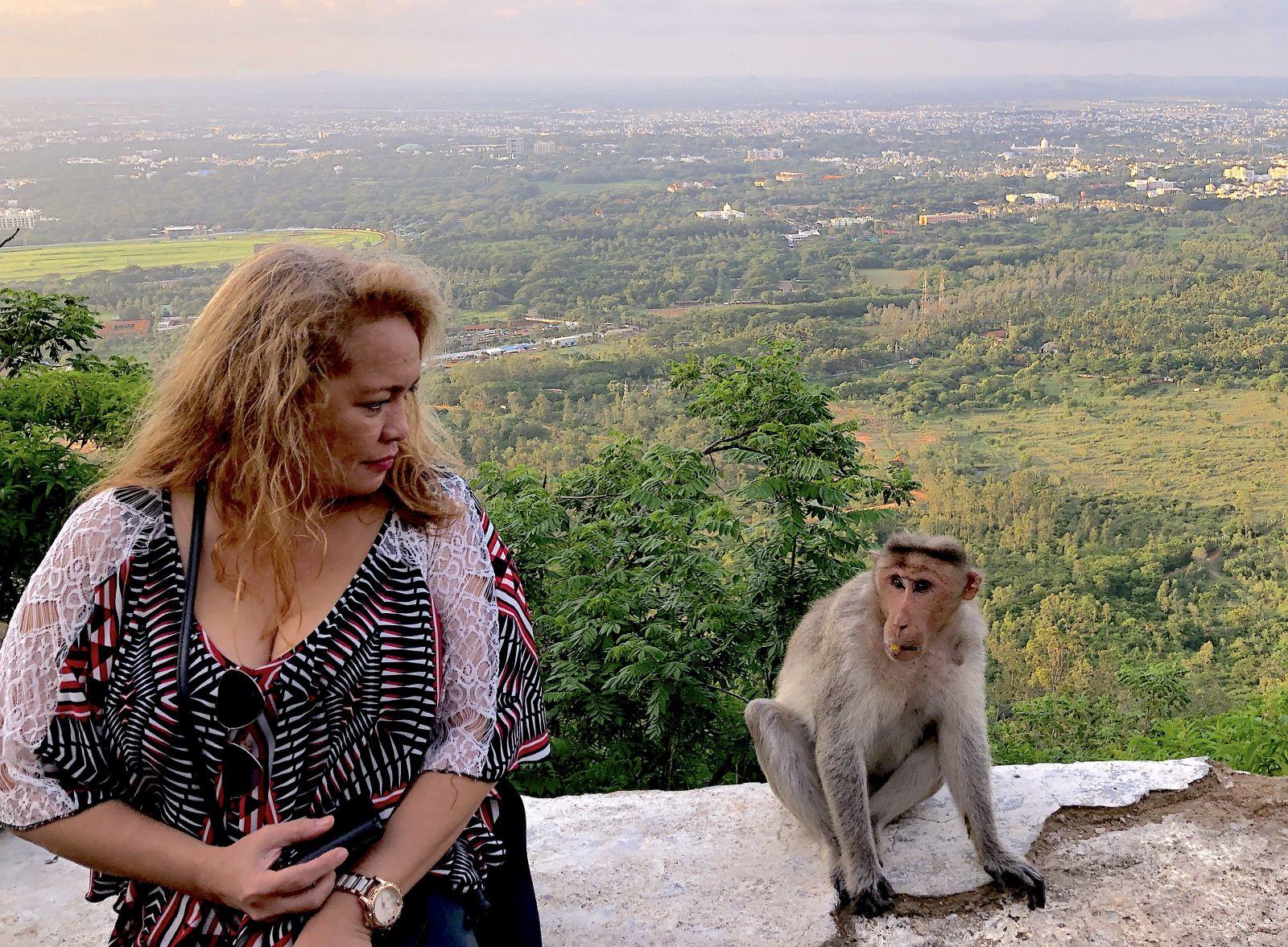 mysore-monkey