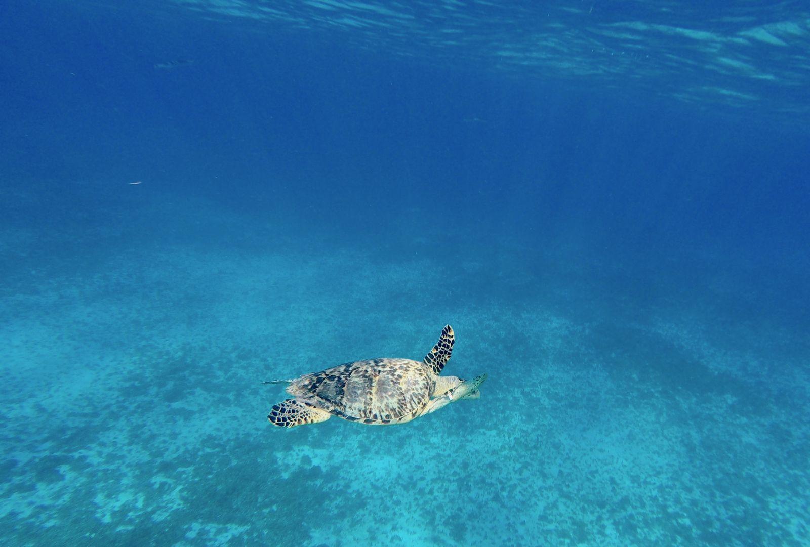 turtle-explorean-cozumel